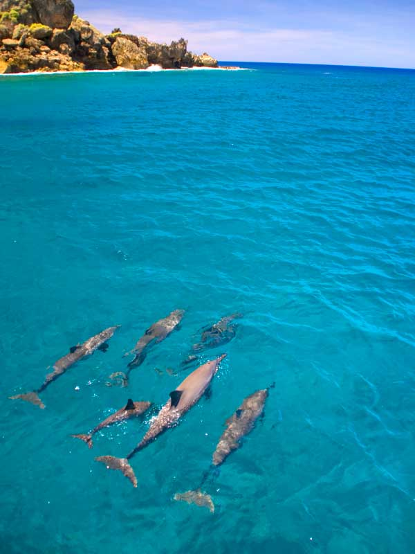 Dolphin Watching Cruise along side Guam's beautiful coast line
