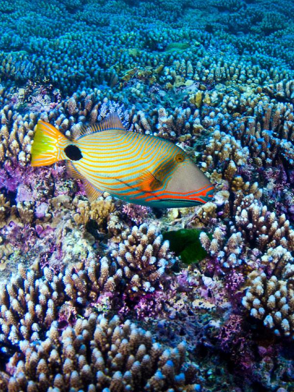 Piti Marine Preserve Image 1