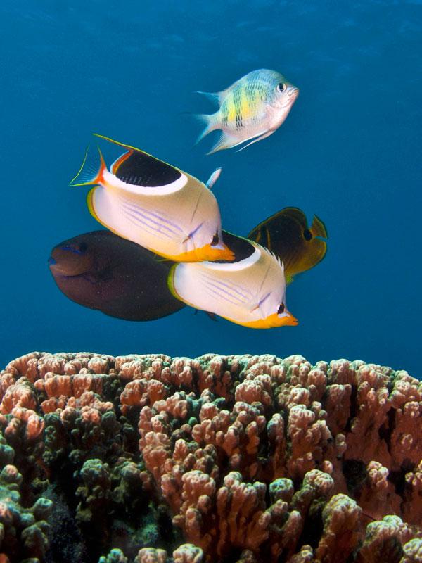 Piti Marine Preserve Image 3