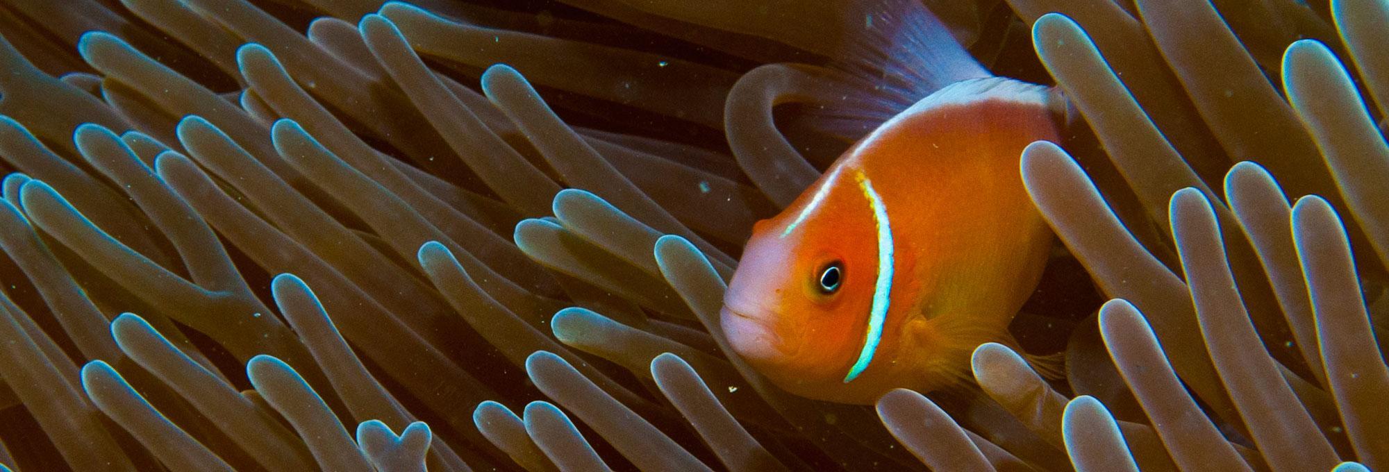 Piti Marine Preserve Image 2