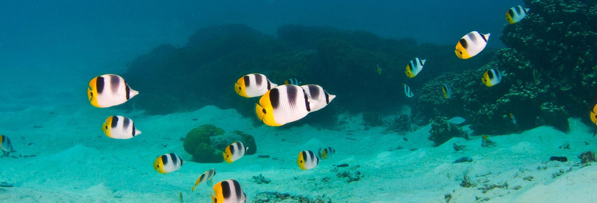 Piti Marine Preserve Image 4