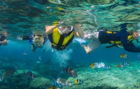 Eco Snorkeling