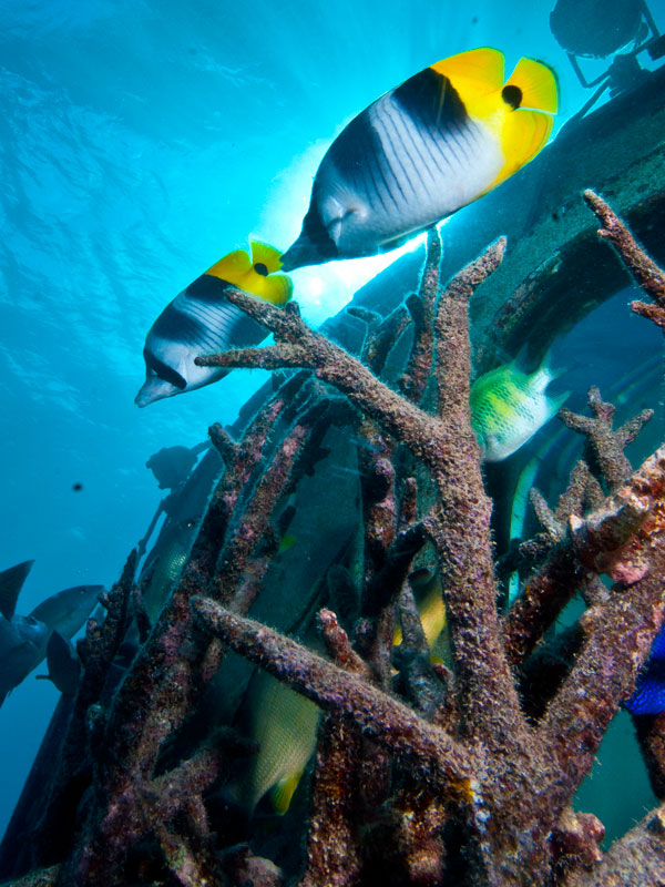 Underwater Observatory Image 3